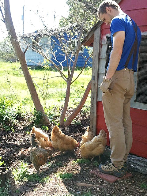 andrew and chickens
