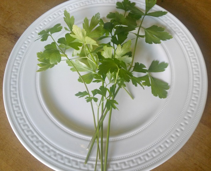 parsley1